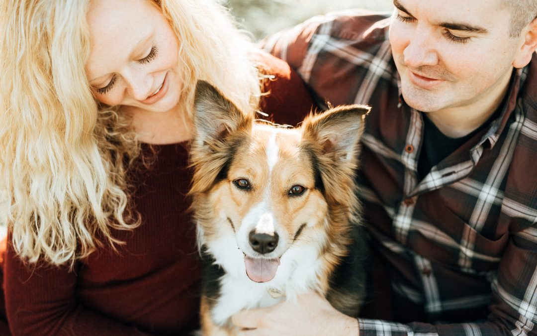 7 Tips For Bringing Dogs To Photo Sessions